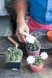 Садовничая кактус в горшечном растении на деревянном столе Стоковые Изображения