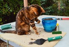 Садовничая кот Стоковое Фото