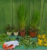 Садовничая натюрморт с заводами в баках и перчатках Стоковая Фотография RF