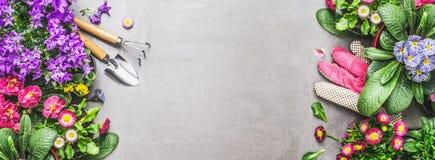 Садовничая предпосылка с цветками, садовыми инструментами и перчатками лета на сером каменном бетоне, взгляд сверху Стоковая Фотография RF