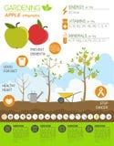 Садовничая работа, обрабатывать землю infographic Apple Графический шаблон Fl Бесплатная Иллюстрация