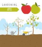Садовничая работа, обрабатывать землю infographic Apple Графический шаблон Fl Стоковое Фото