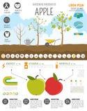 Садовничая работа, обрабатывать землю infographic Apple Графический шаблон Fl Стоковое Изображение RF