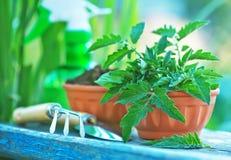 садовничая утварь Стоковое Изображение