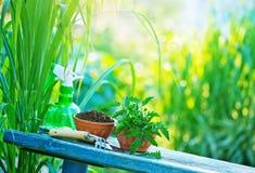садовничая утварь Стоковые Фотографии RF