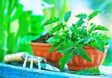 садовничая утварь Стоковое Изображение RF