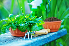 садовничая утварь Стоковое Фото