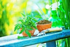 садовничая утварь Стоковое фото RF
