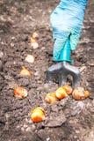 Садоводство Руки активной кавказской женщины осеменяют (засев) стоковые изображения rf