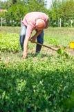 Садоводство стоковое фото