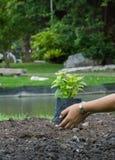 Садоводство Стоковое Изображение