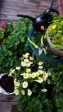 Садоводство Стоковое фото RF