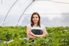 Садоводы клубники с сбором, аграрным инженером работая внутри Стоковое Изображение