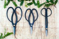 Садовые инструменты на деревянной предпосылке с молодыми ростками Скамья Clippers на деревянной предпосылке Стоковые Фотографии RF