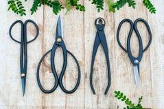 Садовые инструменты на деревянной предпосылке с молодыми ростками Скамья Clippers на деревянной предпосылке Стоковое Фото