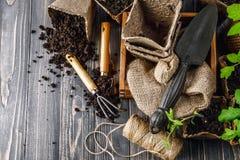 Садовые инструменты с саженцами бака и почвы Стоковое Изображение
