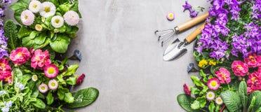 Садовые инструменты с цветками кровати или балкона лета на серой каменной конкретной предпосылке, взгляд сверху Стоковое Фото