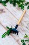 Садовые инструменты для комнатных растений Цветки тяпки и ornamental грабл Стоковое фото RF