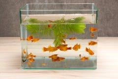 Садок для рыбы на таблице деревянной Стоковая Фотография