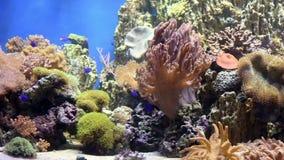 Садок для рыбы с красочными рыбами, живущими кораллами акции видеоматериалы
