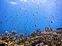 Садок для рыбы Стоковая Фотография RF