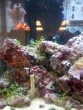 Садок для рыбы Стоковые Фотографии RF