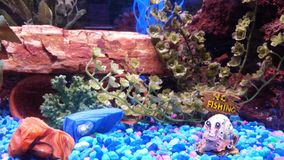 Садок для рыбы Стоковое Фото