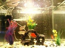 Садок для рыбы стоковое фото rf