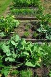 сад органический Стоковое Изображение RF