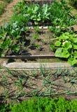 сад органический Стоковые Изображения
