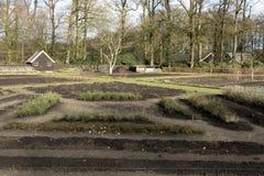 сад органический Стоковое Изображение