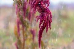 Сад осени в дожде Стоковое Изображение