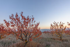 Сад осени на сумраке Стоковая Фотография RF