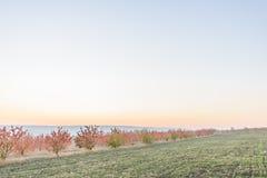 Сад осени на сумраке Стоковые Фото