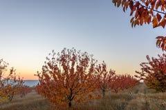 Сад осени на сумраке Стоковое фото RF