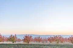 Сад осени на сумраке Стоковая Фотография