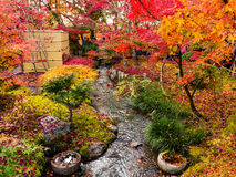 Сад осени на Eikando, Киото Стоковое Фото