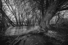 Сад осени с деревьями хурмы и упаденным утром листьев раньше туманным пасмурным Стоковые Изображения RF