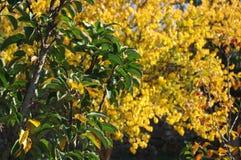 Сад осени Стоковое Изображение RF