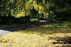 Сад осени Стоковая Фотография