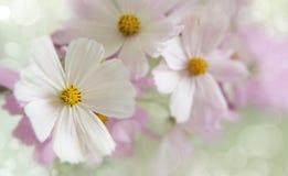 Сад, осень цветет крупный план Gentle, пастельные цвета селективно Стоковые Изображения RF