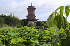 Сад лотоса yuanboyuan парка Стоковая Фотография