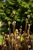 Сад папоротника ботанический Стоковое Изображение