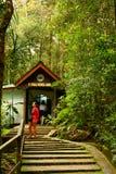 Сад парка Kinabalu ботанический в Сабахе, Малайзии Стоковое Изображение