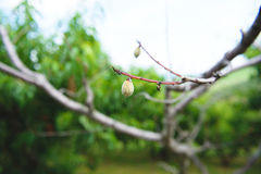 Сад 16 персика Стоковое фото RF