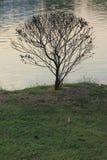 сад природы Стоковое Изображение