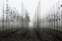 Сад плодоовощ во время тумана Стоковые Изображения
