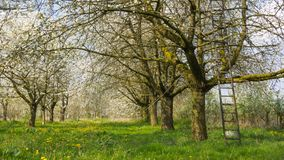 Сад плодоовощ Стоковое Фото