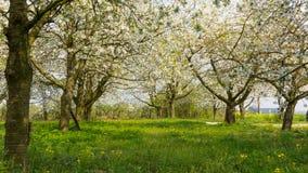 Сад плодоовощ Стоковая Фотография RF