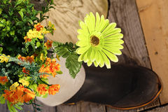 Сад резинового ботинка Стоковая Фотография